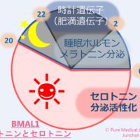 BMAL1 セロトニンとメラトニン