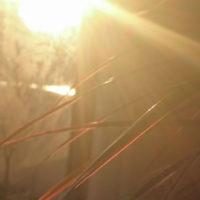 朝の光2017.10.26