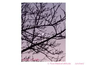 月とさくらの枝