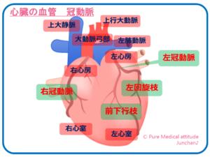 心臓の血管 冠動脈