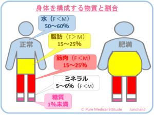 身体を構成する物質と割合