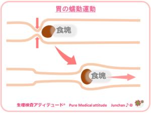 胃の蠕動運動
