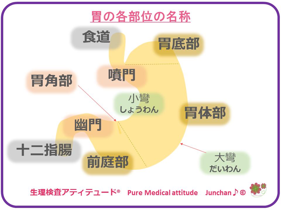 胃への気づかい §1 胃の働きと機...