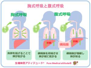 胸式呼吸と腹式呼吸