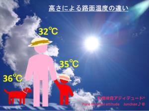 高さによる路面温度の違い
