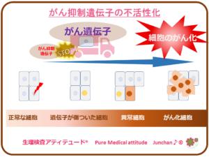 がん抑制遺伝子の不活性化