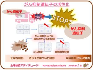 がん抑制遺伝子の活性化