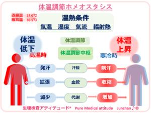 体温調節 ホメオスタシス
