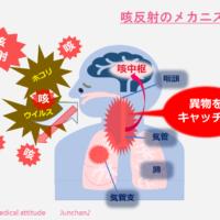 咳反射のメカニズム