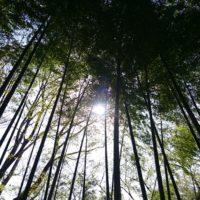 馬場の竹林