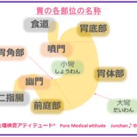 胃の各部位の名称