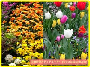 Spring 春のイメージ