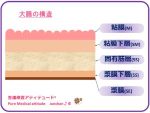 大腸の構造