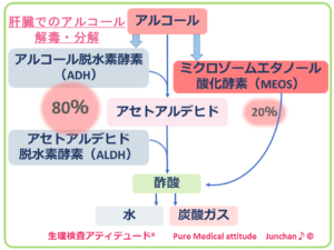 肝臓のアルコールの解毒・分解
