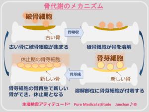 骨代謝のメカニズム