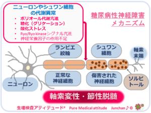 糖尿病性神経障害メカニズム