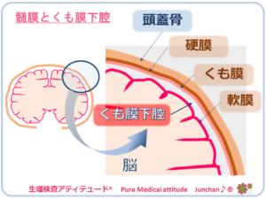 髄膜とくも膜下腔