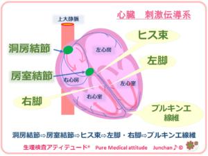 心臓 刺激伝導系