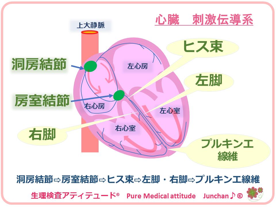 心電図 付け方 ホルター