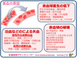 貧血の原因
