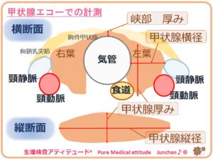 甲状腺エコーでの計測