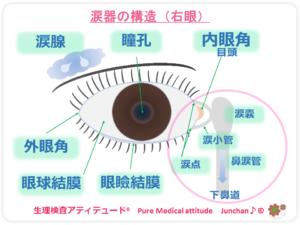 涙器の構造