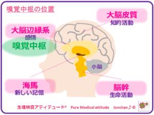 嗅覚中枢の位置