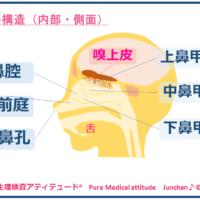 鼻の構造(内部・側面)