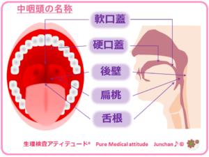 中咽頭の名称