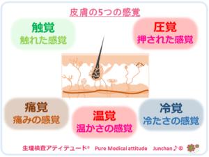 皮膚の5つの感覚