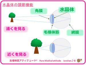 水晶体の調節機能
