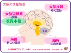 大脳の情報処理
