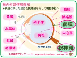 眼の外部情報感知