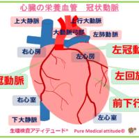 心臓の栄養血管 冠状動脈