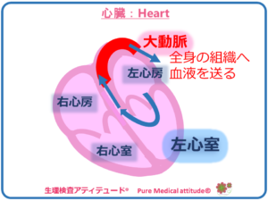 心臓 Heart