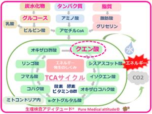 TCAサイクル クエン酸