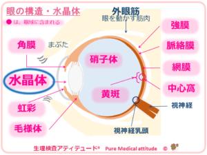 目の構造・水晶体