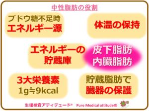 中性脂肪の役割