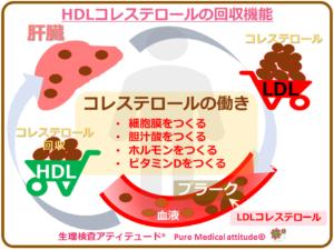 HDLコレステロールの回収機能