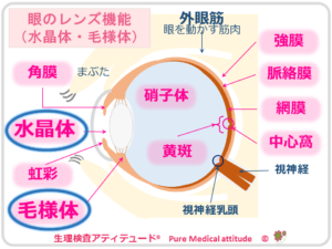 眼のレンズ機能 水晶体・毛様体