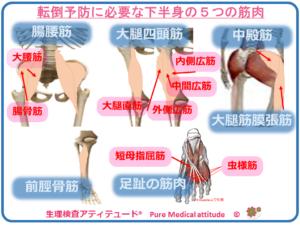 転倒予防に必要な下半身の5つの筋肉