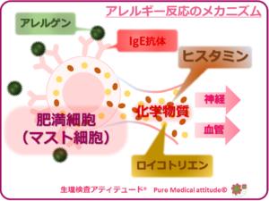 アレルギー反応のメカニズム