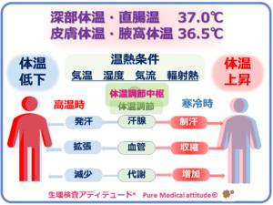 人の体温調節機能