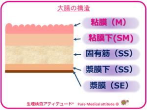 大腸の5層構造