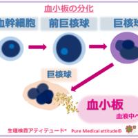 血小板の分化