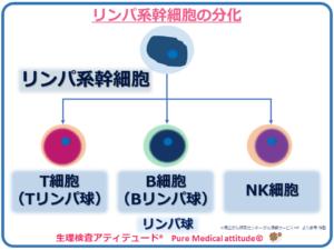 リンパ系幹細胞の分化