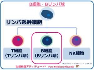 B細胞・Bリンパ球