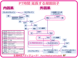 PT時間 延長する凝固因子