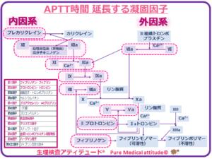 APTT時間 延長する凝固因子