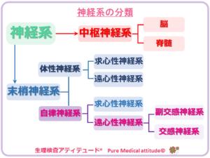 神経系の分類